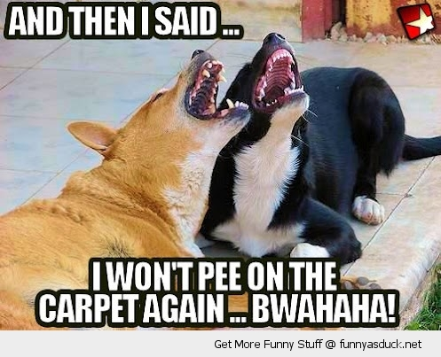 Fun Dog Meme : Funny laughing dogs pee carpet pics live your fun